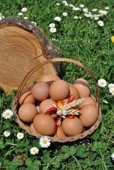 Cesto di uova nell'erba. Primavera