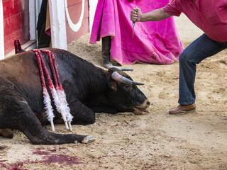 Descabello de un toro