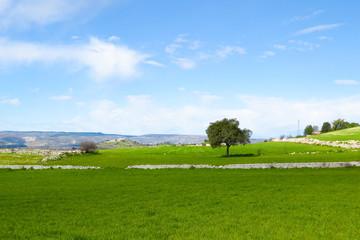Prato verde - pianeta verde - pianeta terra