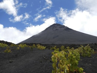 Black volcanic cone with grape vines in foreground