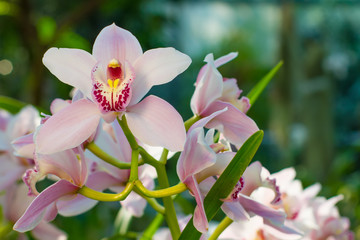 Gentle pink blooming orchids.