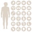 human body anatomy, vector medical organs icon, - 81035503