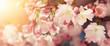 Leinwanddruck Bild - Kirschblüten in sanften Retro-Farben