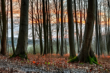 Spring Forest Sunset