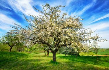 Idyllische Frühlingslandschaft