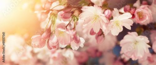 Leinwanddruck Bild Kirschblüten in sanften Retro-Farben
