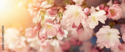 Tuinposter Lente Kirschblüten in sanften Retro-Farben