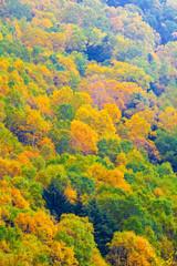秋色の高原