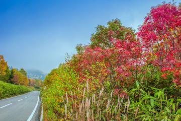 秋色の高原と道路