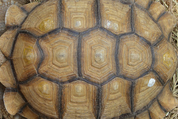 Background Turtle Shell