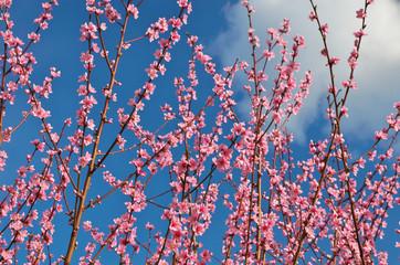 Spring peach.