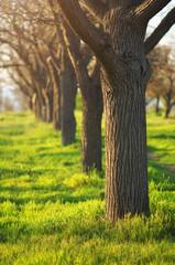 Green grass in park