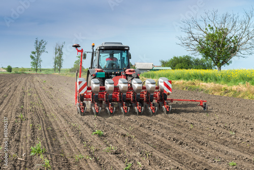 wheat sowing - 81046317