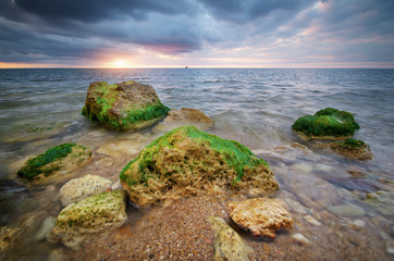 Seaweed on the sea