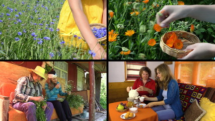 Hand gather herbs and women drink herbal tea. Clips collage.
