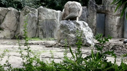 Elephant playing with a large bowl at the zoo