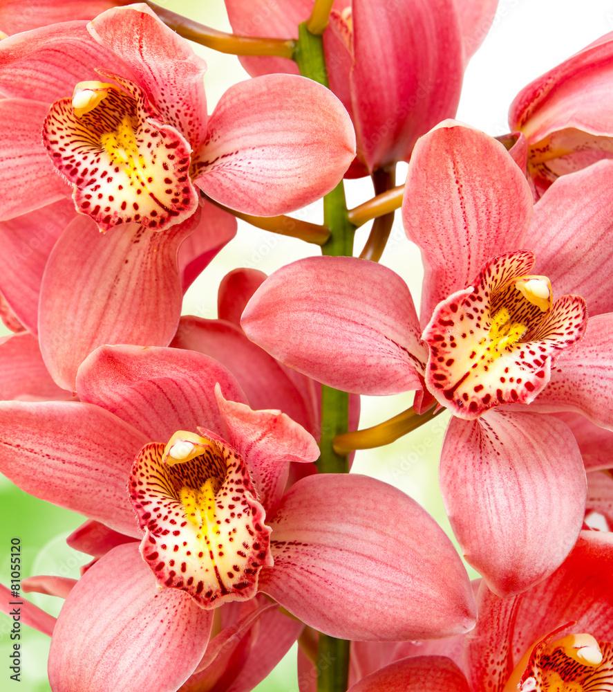 piękny uroda kwiat - powiększenie