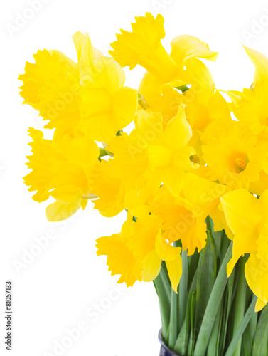 Aluminium Narcis spring narcissus