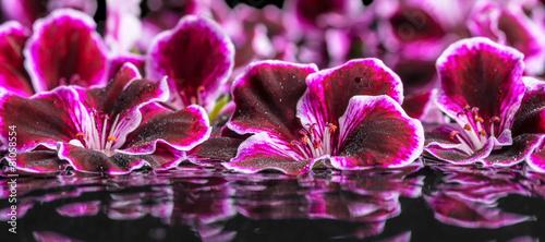 beautiful spa concept of geranium flower in ripple reflection wa - 81058554