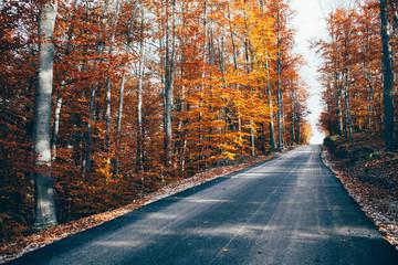 empty road in autumn lanscape