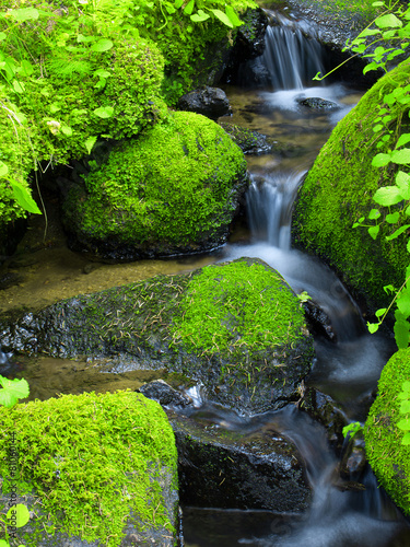 Mountain stream among the mossy stones - 81060144