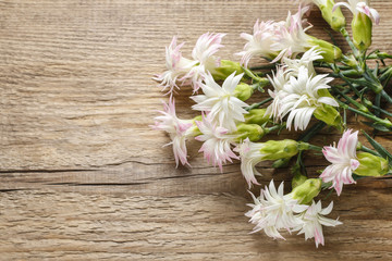 White carnations on wooden background