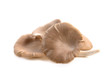 Leinwanddruck Bild - oyster mushroom on white background