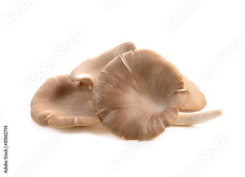 oyster mushroom on white background - 81062714