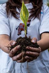 planta con tierra