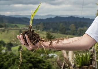 mano con raíces