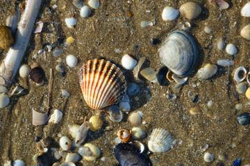 Des coquillages sur la plage