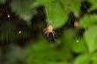 Big spider - 81066707