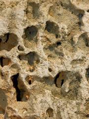 Limestone relief with deep holes end shells