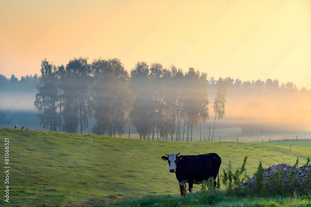 wiejski świt mgła - powiększenie