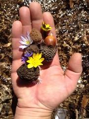 doğal mantarlar ve doğa sevgisi