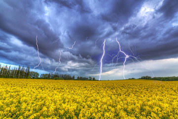 Summer storm over the rapeseed field in Poland