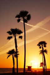 Beach Palm Tree Sunset