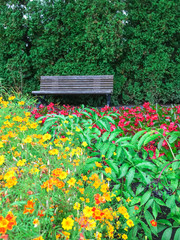 Wooden bench in blooming summer garden