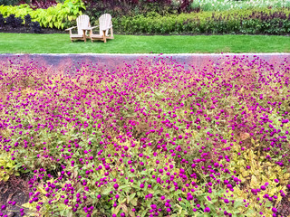 Garden with purple flowers and wooden chairs