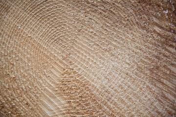 sawed-off tree trunk detail