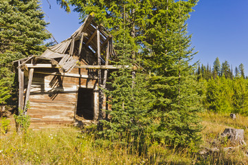 Abandoned log cabin in trees