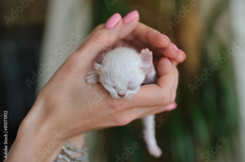 Fotobehang Dragen Newborn little white kitten in female hands.