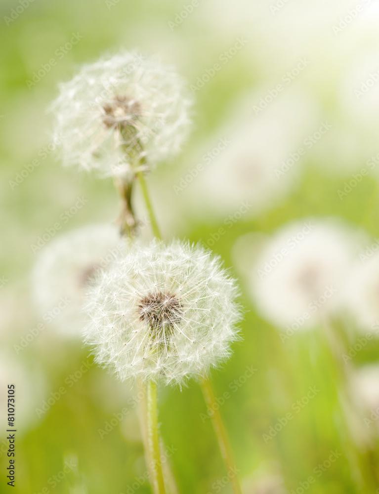 dzień łąka polana - powiększenie