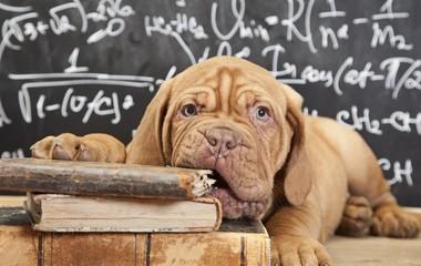 Собака грызет книги