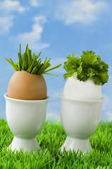 Zwei Bio-Eier