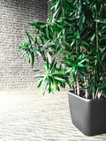 Green plant in a gray room with brick wall