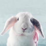 White soft bunny rabbit - 81082388