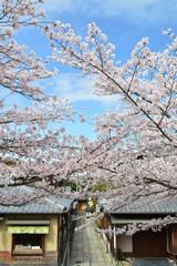 桜の東山石堀小路