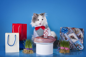 cat surrounded by gifts make a wish