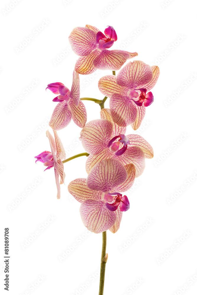 zbliżenie na białym tle kwiat - powiększenie